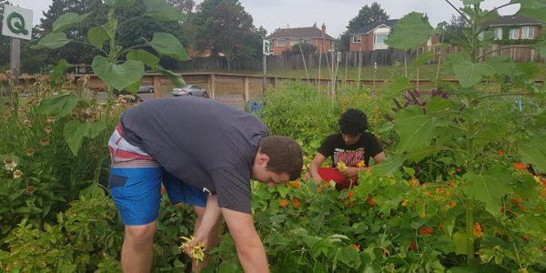 2019 Harvest Day #2 July 30, 2019